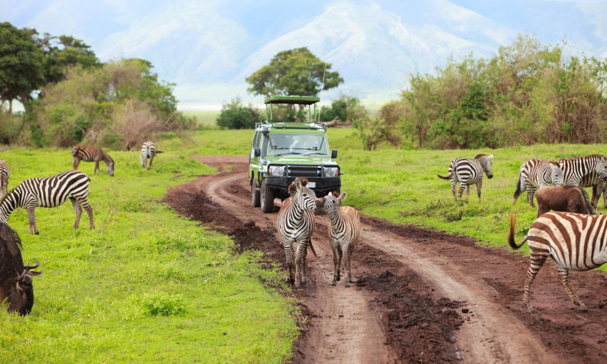 programar safaris en Tanzania