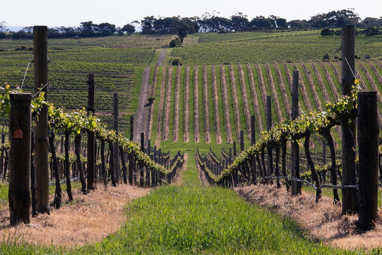 Australia regiones vinícolas