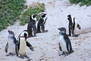 penguinos 300x200