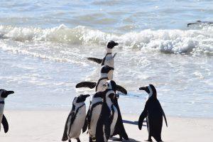 penguins 300x200