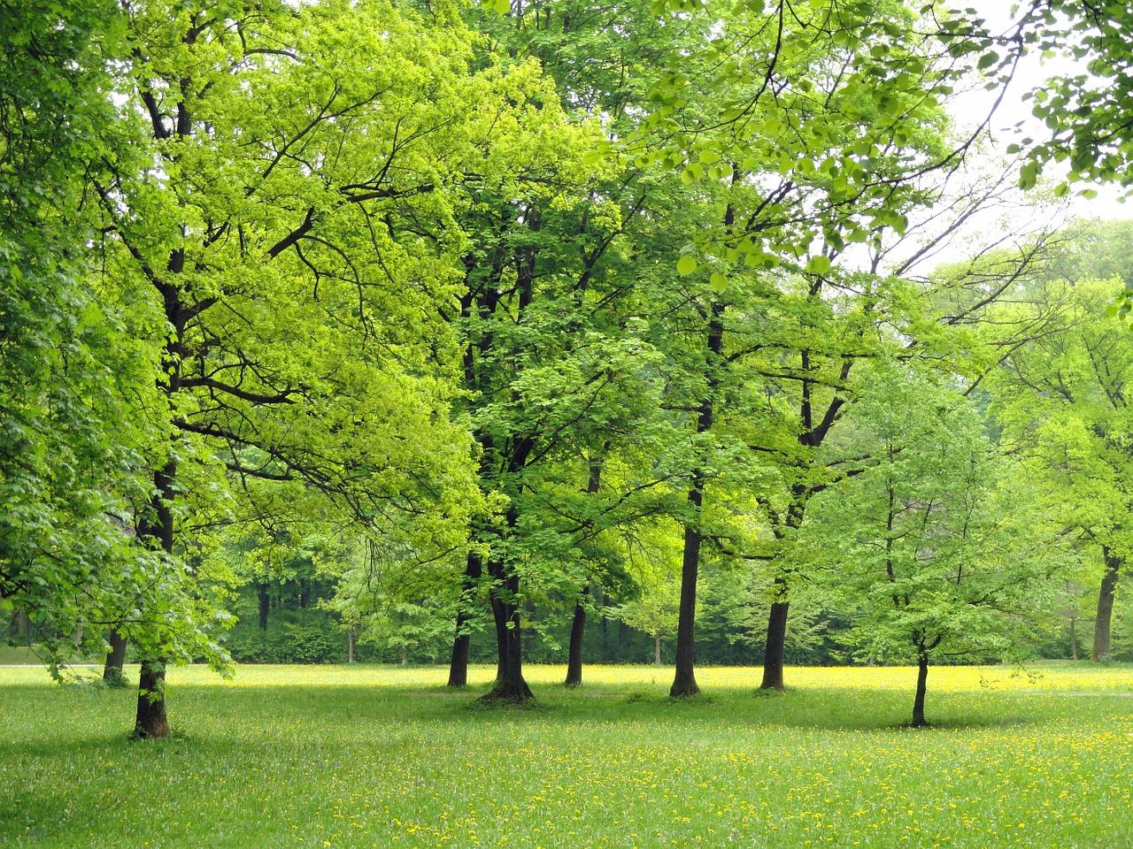parque nacional alemania