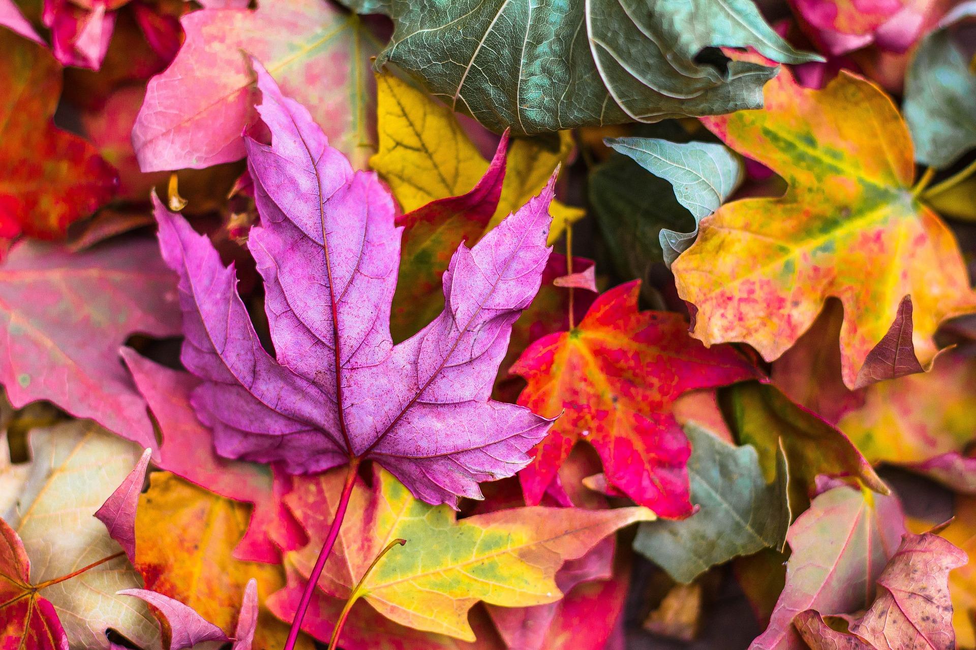 Follaje de otoño: lugares de cuento para verlo en Italia